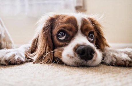 מזון לכלבים – איך בוחרים את המזון הנכון לכלב שלנו