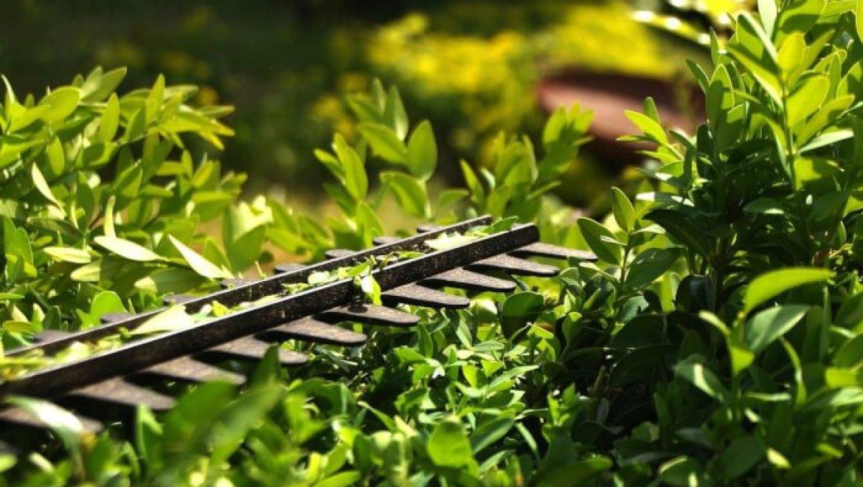 גוזמי גדר חיה – אמצעי בטיחות יש לנקוט בשימוש בהם!