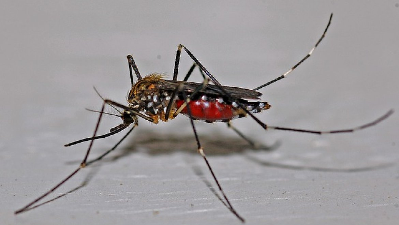 חרקים מעופפים – איך מדבירים אותם