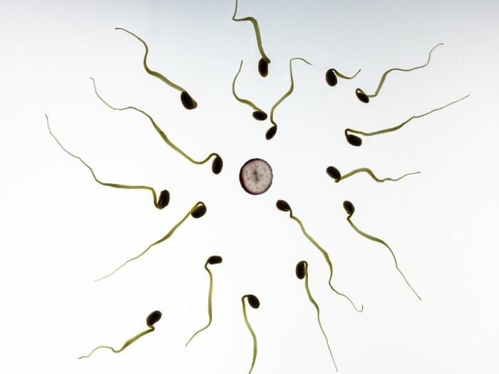 בדיקות זרע
